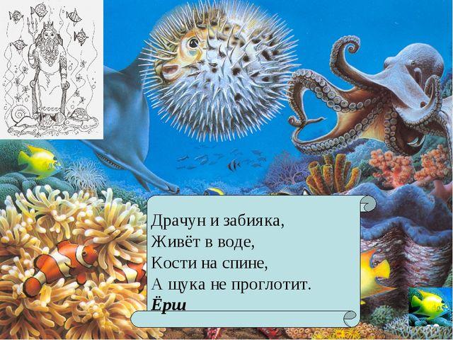 Драчун и забияка, Живёт в воде, Кости на спине, А щука не проглотит. Ёрш