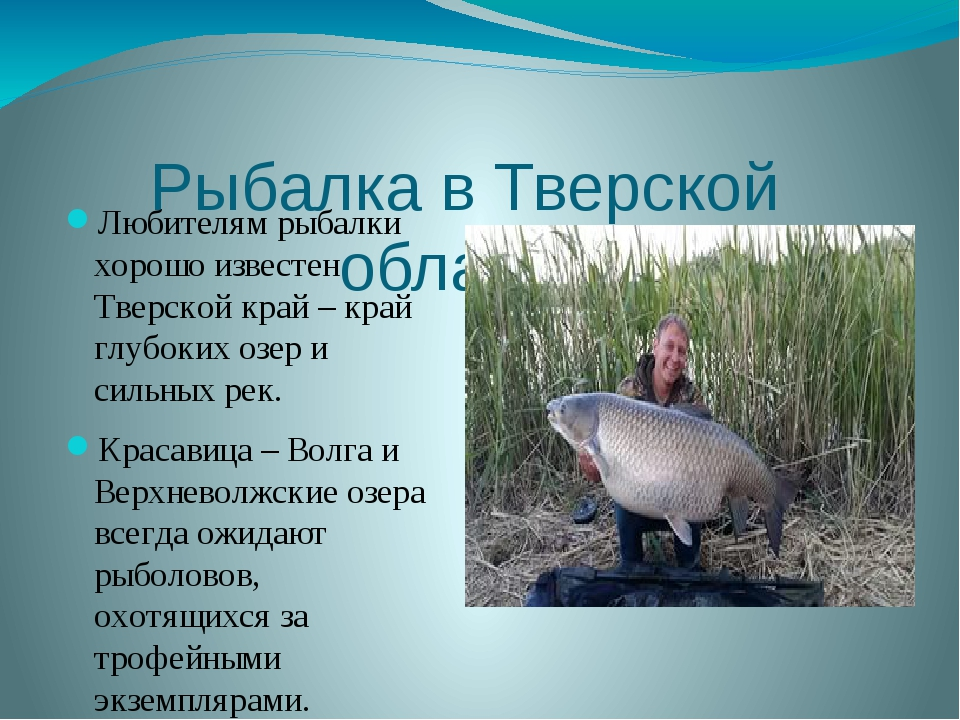 Рыбалка в Тверской области Любителям рыбалки хорошо известен Тверской край –...