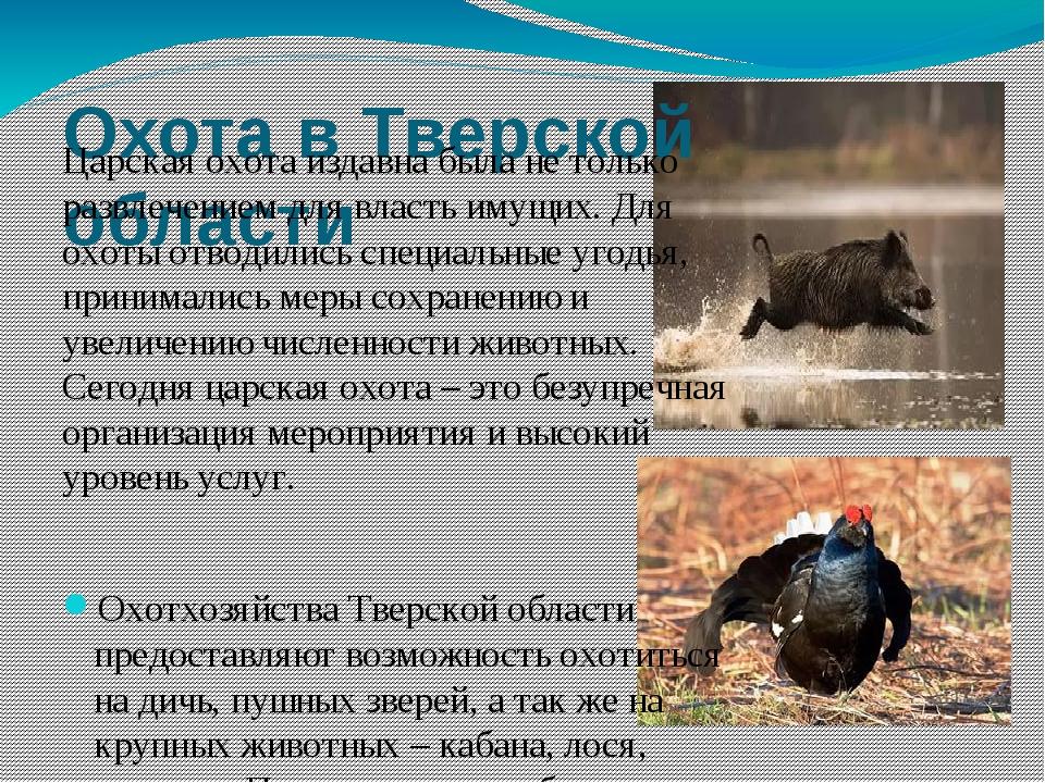 Охота в Тверской области Царская охота издавна была не только развлечением дл...