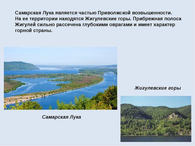 Самарская Лукаявляется частью Приволжской возвышенности. На ее территории на...