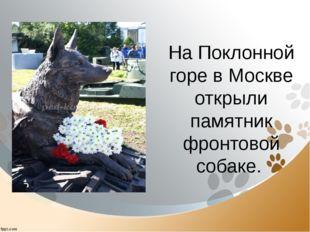 На Поклонной горе в Москве открыли памятник фронтовой собаке.