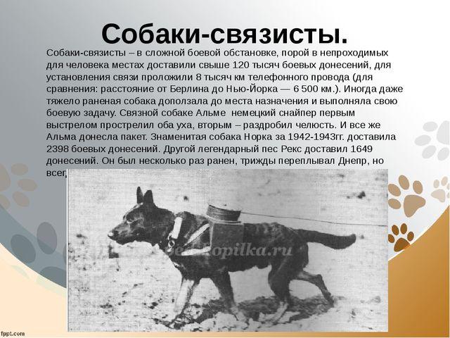 Собаки-связисты. Собаки-связисты – в сложной боевой обстановке, порой в непро...
