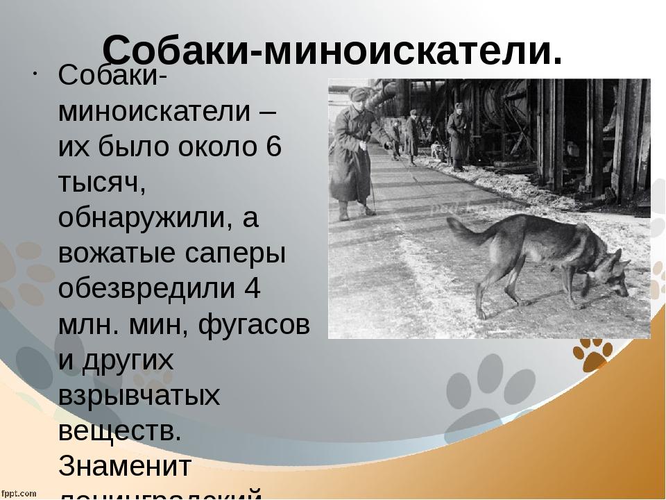 Собаки-миноискатели. Собаки-миноискатели – их было около 6 тысяч, обнаружили,...
