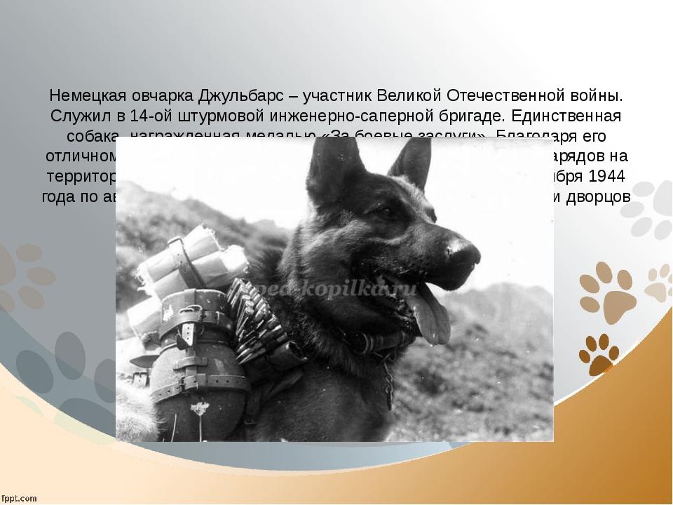 Немецкая овчарка Джульбарс – участник Великой Отечественной войны. Служил в...