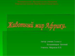 Автор: ученик 5 класса Колышницын Евгений Учитель: Миронов В.В. Муниципальное