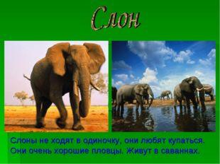 Слоны не ходят в одиночку, они любят купаться. Они очень хорошие пловцы. Живу