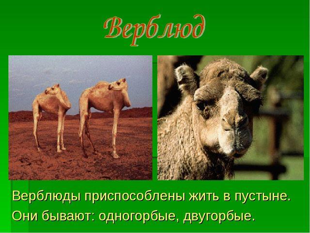 Верблюды приспособлены жить в пустыне. Они бывают: одногорбые, двугорбые.