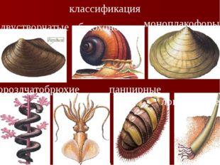 классификация двустворчатые бороздчатобрюхие брюхоногие моноплакофоры головон