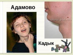 Адамово яблоко Кадык