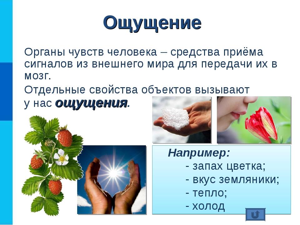 Органы чувств человека – средства приёма сигналов из внешнего мира для переда...