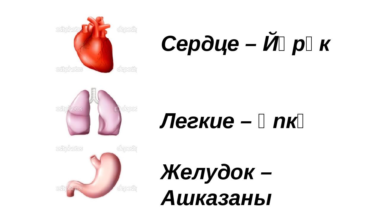 Сердце – Йөрәк Легкие – Үпкә Желудок – Ашказаны