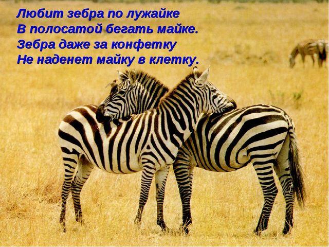Любит зебра по лужайке В полосатой бегать майке. Зебра даже за конфетку Не на...