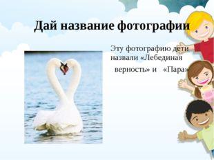 Дай название фотографии Эту фотографию дети назвали «Лебединая верность» и «П