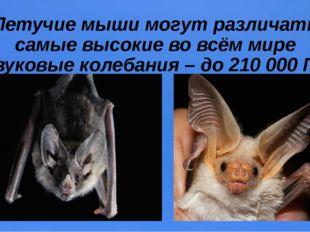 Летучие мыши могут различать самые высокие во всём мире звуковые колебания –