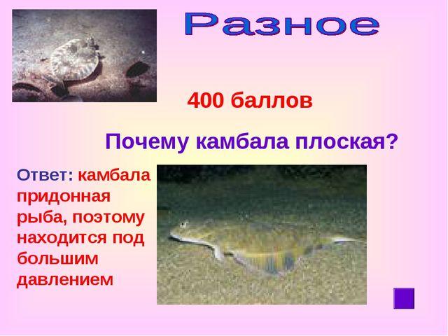 400 баллов Почему камбала плоская? Ответ: камбала придонная рыба, поэтому на...