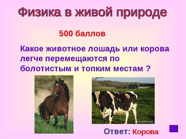 500 баллов Какое животное лошадь или корова легче перемещаются по болотистым...