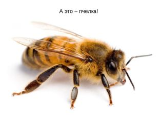 А это – пчелка!