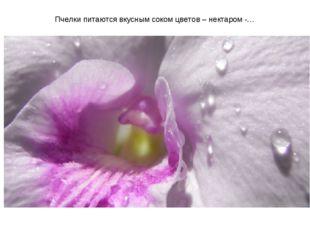 Пчелки питаются вкусным соком цветов – нектаром -…