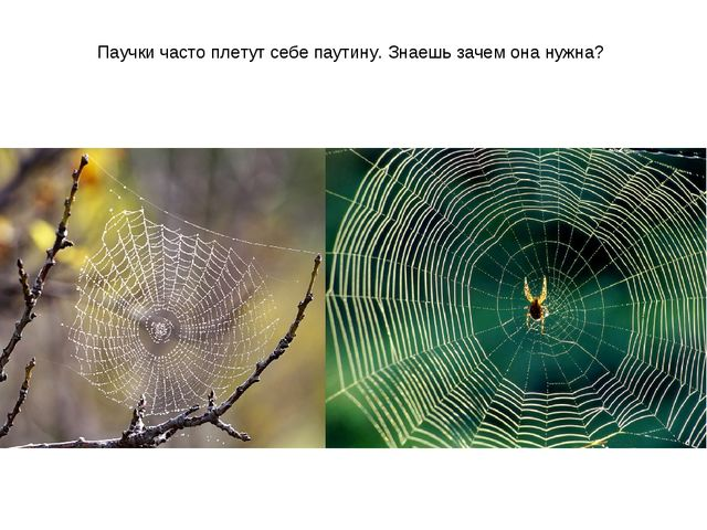 Паучки часто плетут себе паутину. Знаешь зачем она нужна?