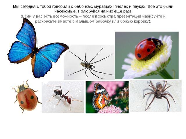 Мы сегодня с тобой говорили о бабочках, муравьях, пчелах и пауках. Все это бы...