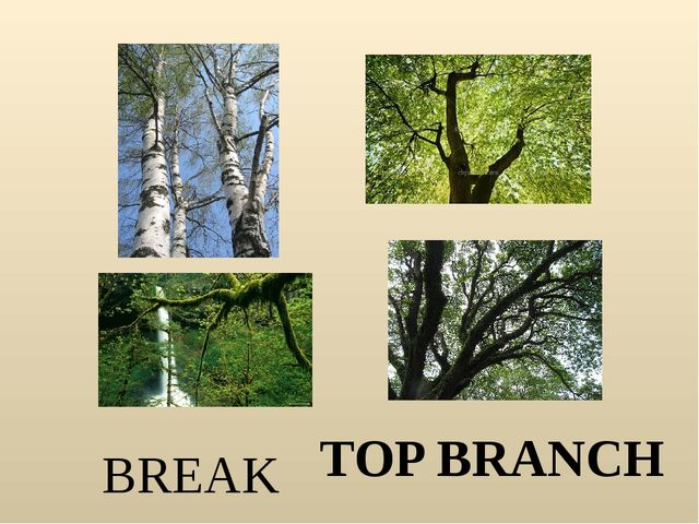 BREAK TOP BRANCH