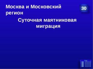 Москва и Московский регион Суточная маятниковая миграция