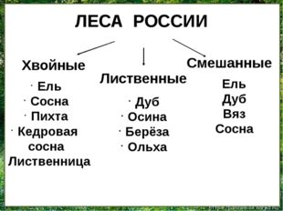 ЛЕСА РОССИИ Хвойные Лиственные Смешанные Ель Сосна Пихта Кедровая сосна Листв
