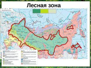 Лесная зона находится южнее зоны тундры. На карте она обозначена зелёным цв