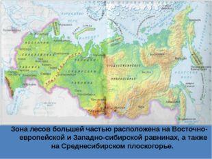 Зона лесов большей частью расположена на Восточно-европейской и Западно-сиби
