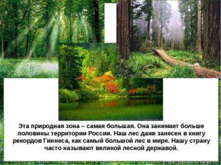 Эта природная зона – самая большая. Она занимает больше половины территории