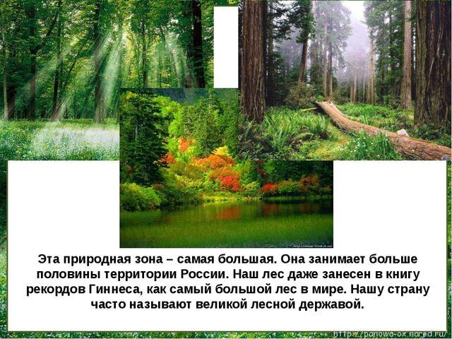 Эта природная зона – самая большая. Она занимает больше половины территории...