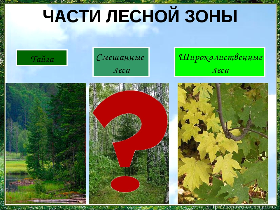 ЧАСТИ ЛЕСНОЙ ЗОНЫ Тайга Широколиственные леса Смешанные леса