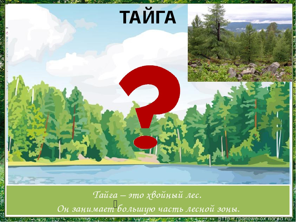ТАЙГА Тайга – это хвойный лес. Он занимает большую часть лесной зоны. ʹ