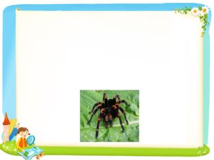 Ex. 2b Look and answer the questions? 1. What can tarantula do? 2. What does