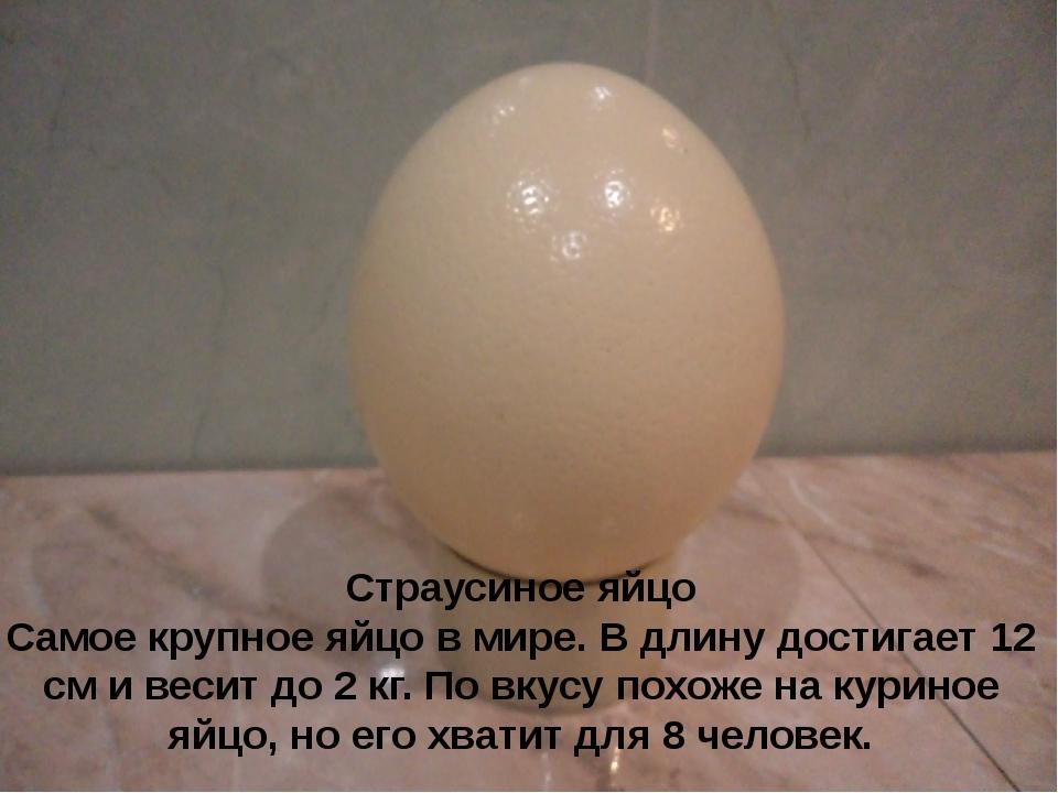 Страусиное яйцо Самое крупное яйцо в мире. В длину достигает 12 см и весит д...