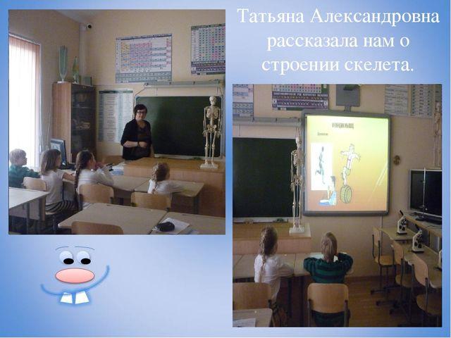 Татьяна Александровна рассказала нам о строении скелета.