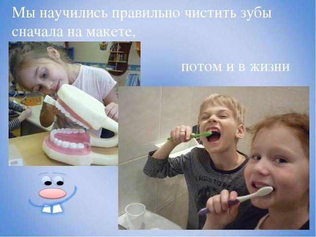Мы научились правильно чистить зубы сначала на макете, потом и в жизни