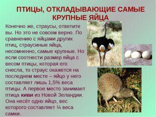 ПТИЦЫ, ОТКЛАДЫВАЮЩИЕ САМЫЕ КРУПНЫЕ ЯЙЦА Конечно же, страусы, ответите вы. Но