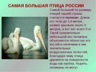 САМАЯ БОЛЬШАЯ ПТИЦА РОССИИ Самой большой по размеру птицей нашей страны счита