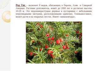Род Тис – включает 8 видов, обитающих в Европе, Азии и Северной Америке. Раст