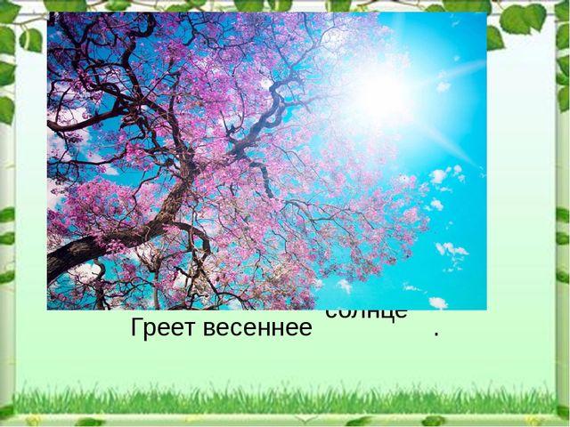 солнце Греет весеннее .