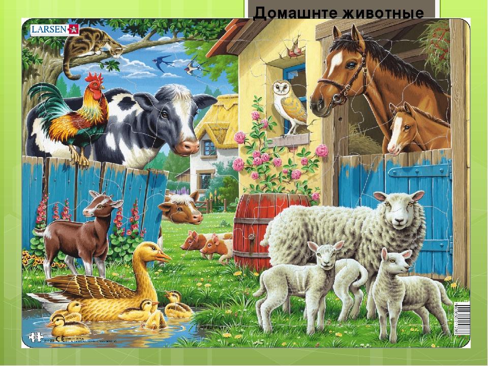 Домашнте животные