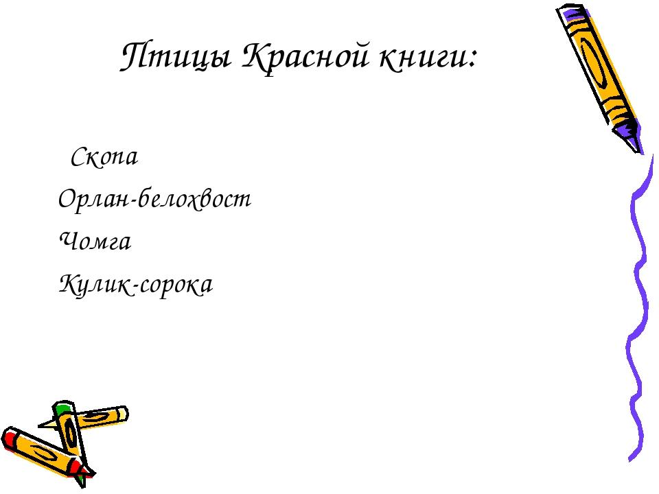 Птицы Красной книги: Скопа Орлан-белохвост Чомга Кулик-сорока