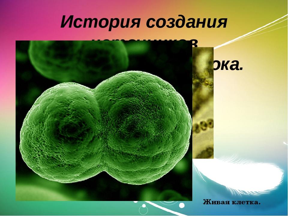 История создания источников электрического тока. Цианобактерии. Живая клетка.