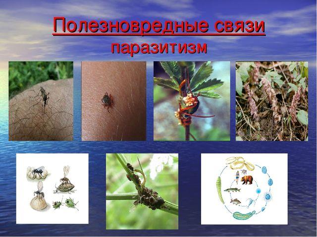 Полезновредные связи паразитизм