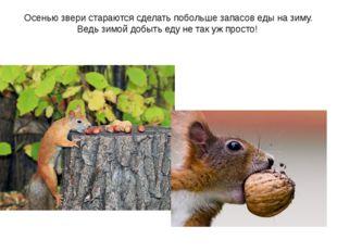 Осенью звери стараются сделать побольше запасов еды на зиму. Ведь зимой добыт