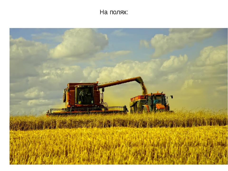 На полях: