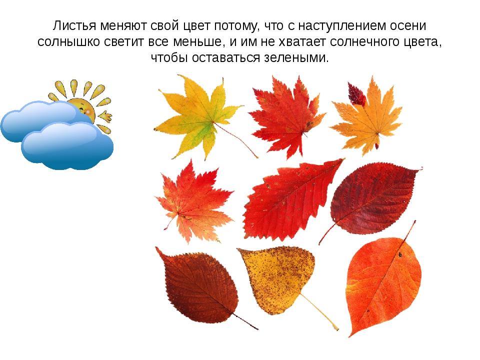 Листья меняют свой цвет потому, что с наступлением осени солнышко светит все...