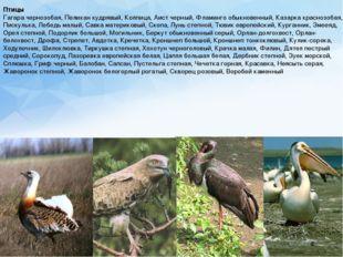 Птицы Гагара чернозобая, Пеликан кудрявый, Колпица, Аист черный, Фламинго обы