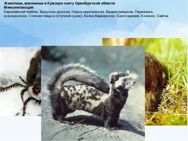 Животные, внесенные в Красную книгу Оренбургской области Млекопитающие Европ...